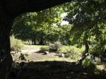 The Big Oak Campsite